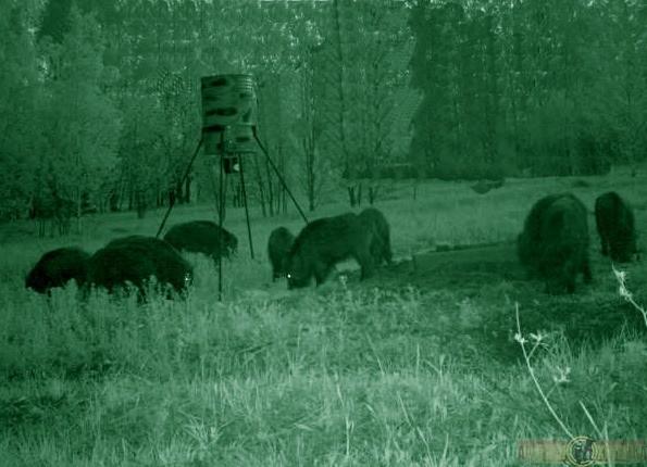 охота и охотхозяйства